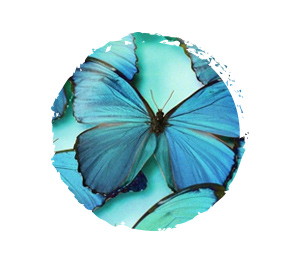 Color Your World - Blue. Butterfly.