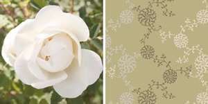 Neutral - Dashing Roses